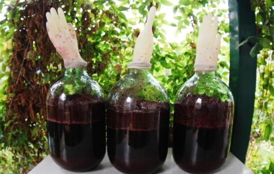 Как сделать домашнее вино из черноплодной рябины в домашних условиях
